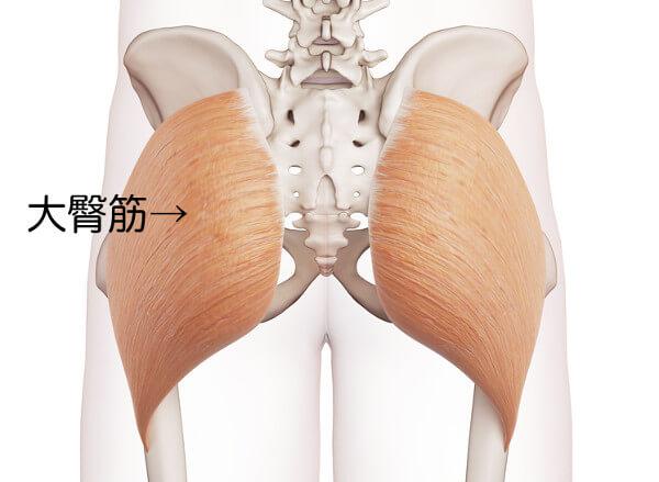 ヒップアップに必要な大臀筋とはどんな筋肉?